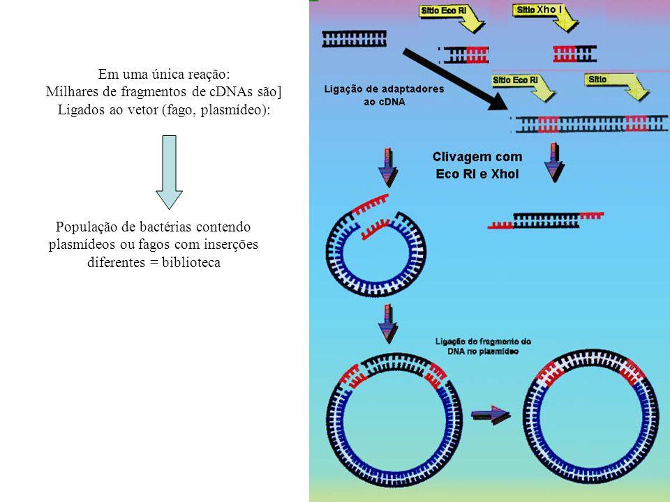 Milhares de fragmentos de cDNAs são]